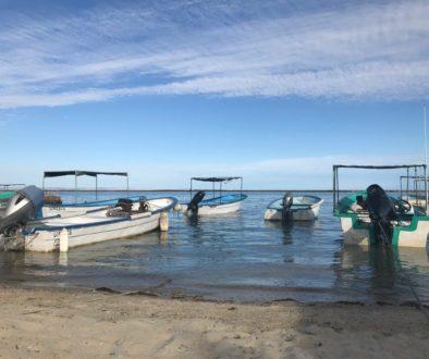 El Manglito, le pari d'une pêche durable